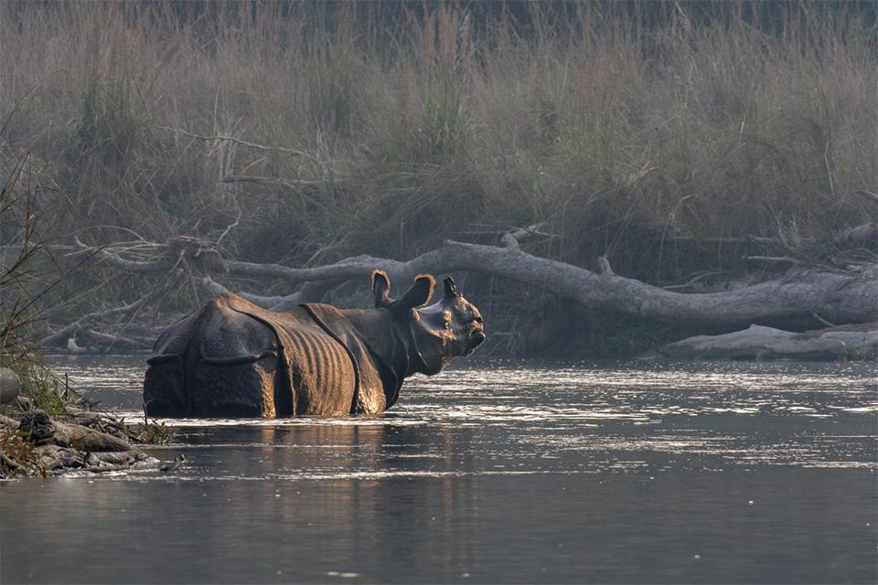 Bardia National Park Tour from Kathmandu